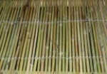 Bamboo Fence with thread weaven